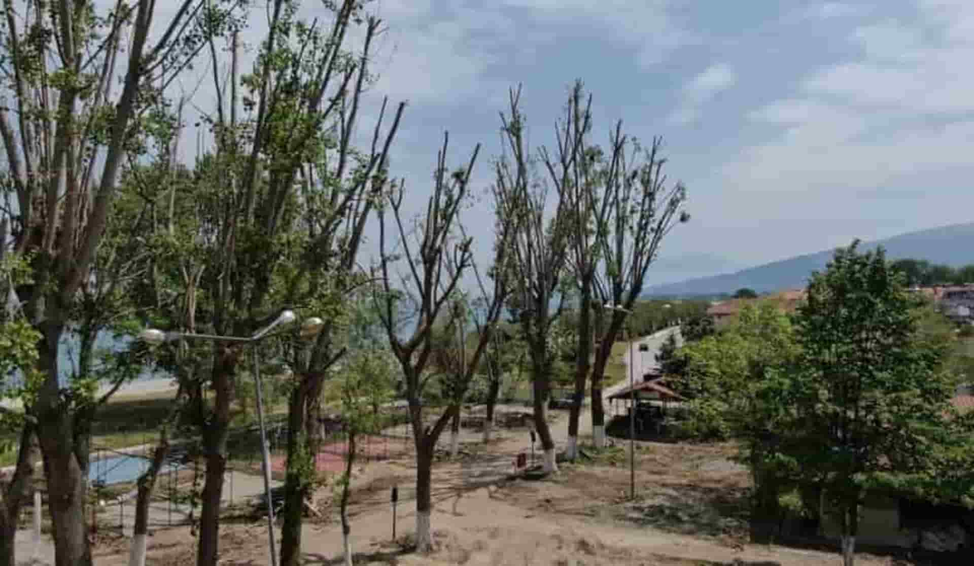 κοπή του επικίνδυνου δέντρου Θεσσαλονίκη Μακεδονία Χαλκιδική Μακεδονία