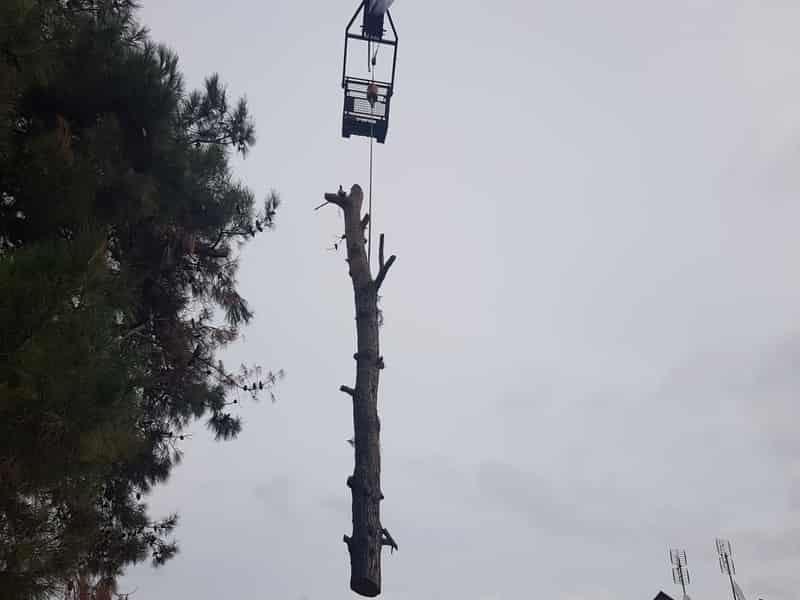 κοπή δέντρου με γερανό Θεσσαλονίκη και Νομό χαλκιδικής