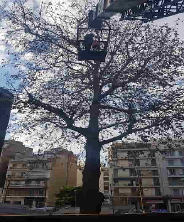 κοπή δέντρων χωρίς άδεια κόστος