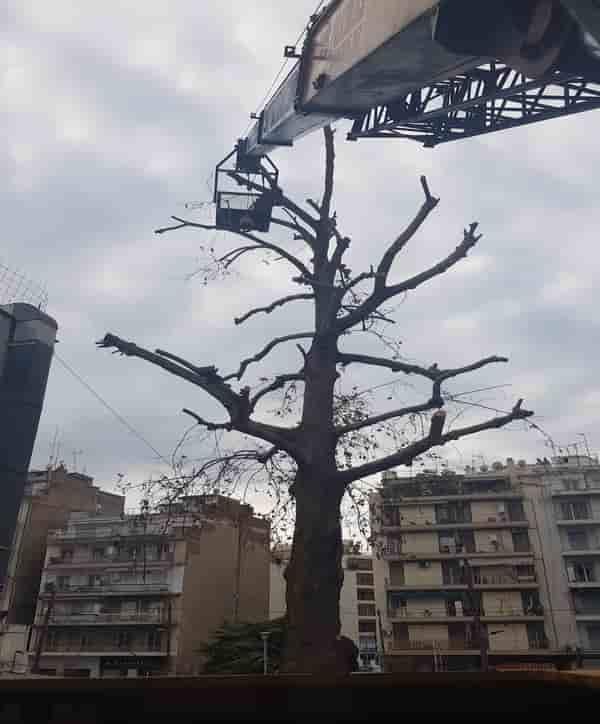 κοπή επικίνδυνων δέντρων Θεσσαλονίκη