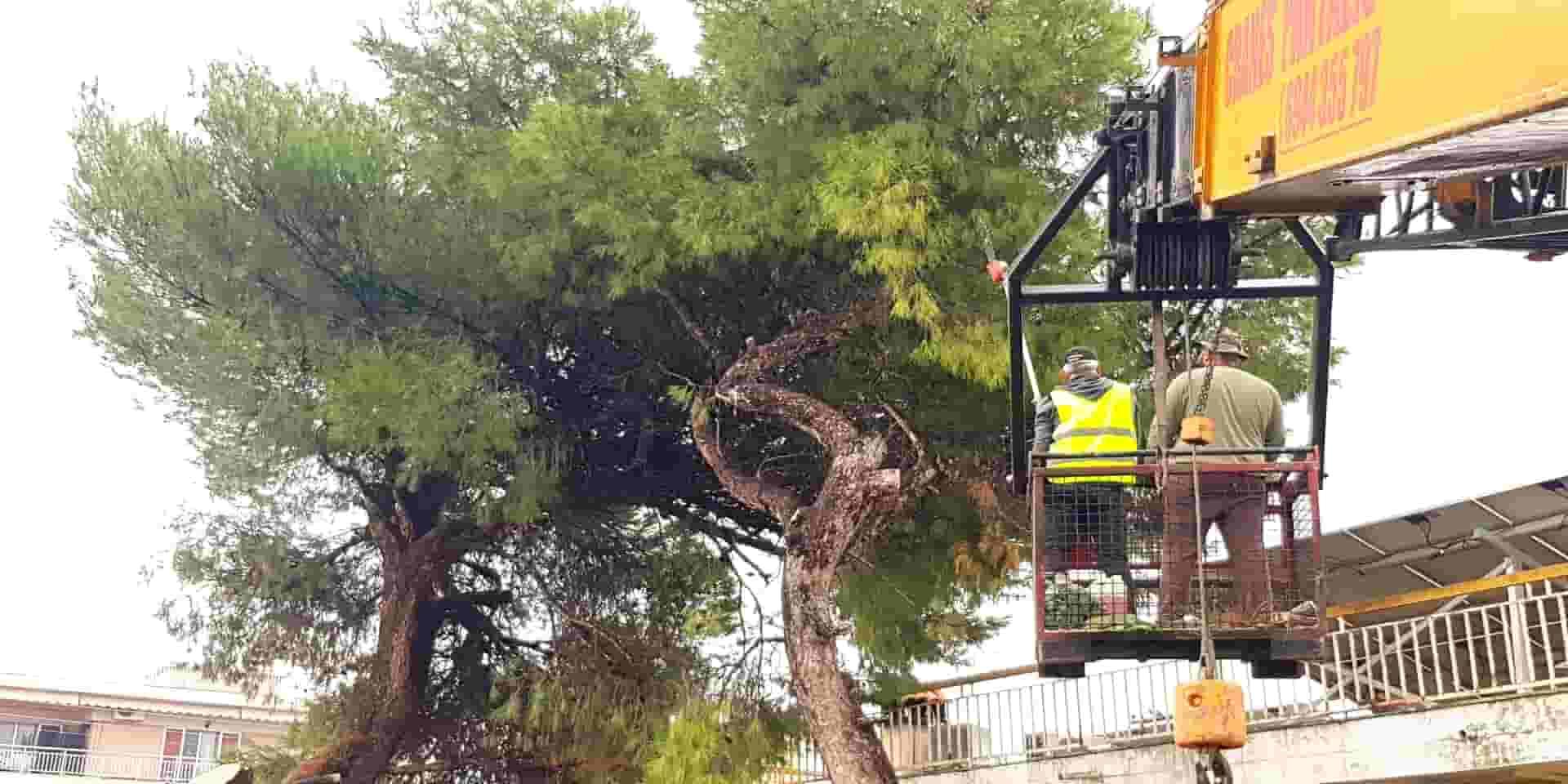 κοπή υψηλών δένδρων τιμές κόστος προσφορά Θεσσαλονίκη Χαλκιδική