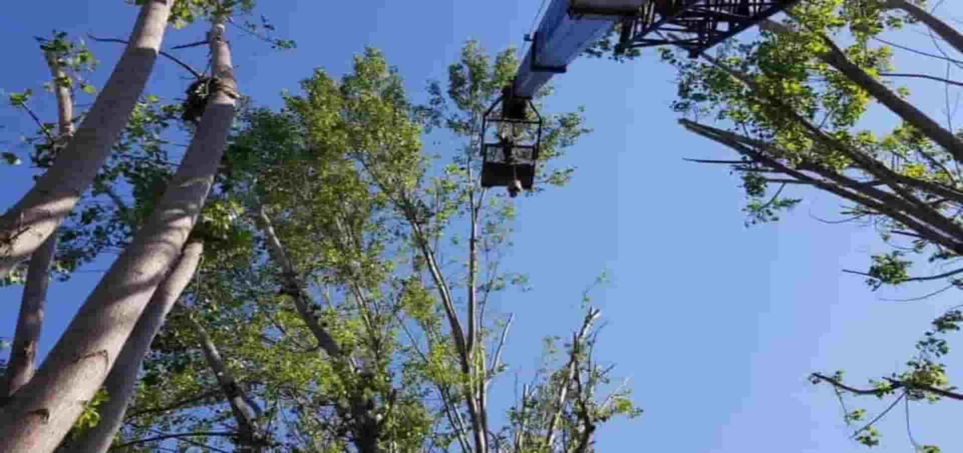 κόψιμο επικίνδυνα δέντρα κλάδεμα δέντρων