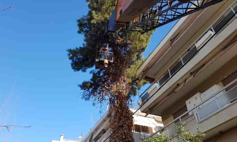 ειδική πάστα για κλάδεμα δέντρων επούλωση πληγών